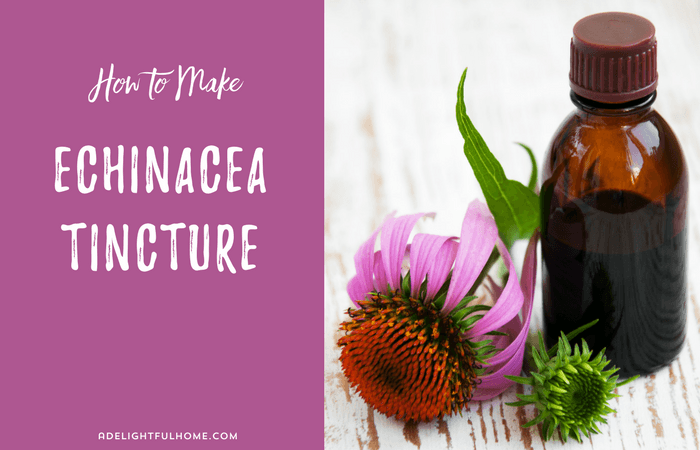 how to take echinacea tincture