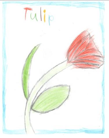 tulip-7yrs