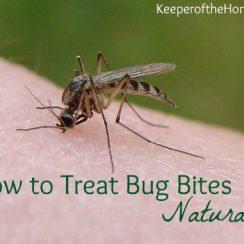 KOTH-bug-bites