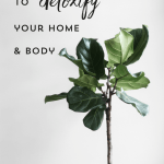 5 Simple Ways to Detoxify Your Home and Body
