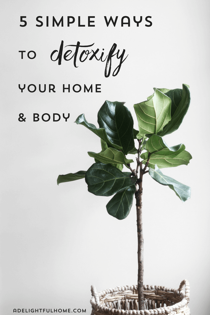 "Image of a houseplant. Text overlay says, ""Five Simple Ways to Detoxify Your Home & Body""."