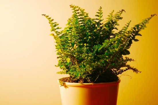 Using Plants to Clean the Air in Your Home