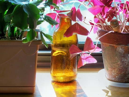 Using Plants To Clean The Air In Your Home A Delightful Home