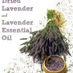 Things to Make with Dried Lavender (and Lavender Essential Oil)