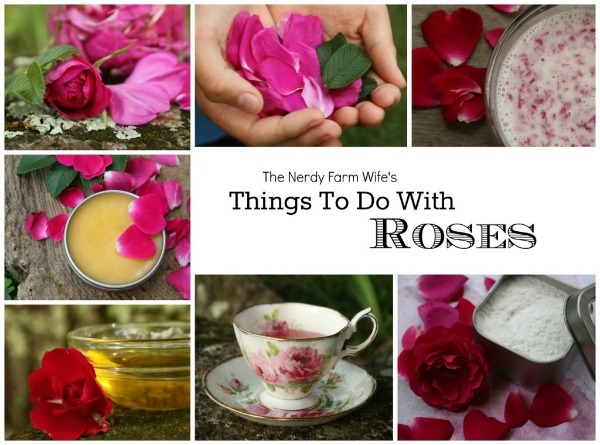 Cover-for-Rose-eBook-600