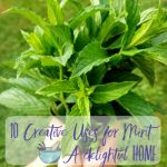 10 Creative Ways to Use Mint When you Have an Abundance