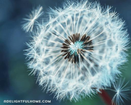 Health Benefits of Dandelion Tea | aDelightfulHome.com