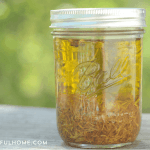 How to Make (and Use) Calendula Oil