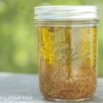 How to Make (and Use) Calendula Oil