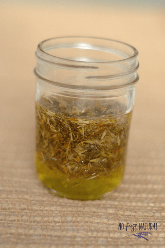 dried arnica and olive oil in canning infusing for arnica salve
