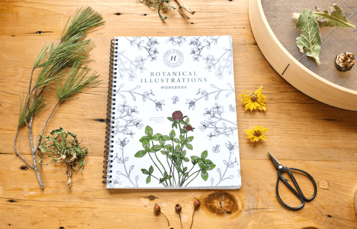 botanical illustrations workbook on wooden table with herbs strewn around it