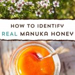 What is Manuka Honey? UMF, MGO, and More